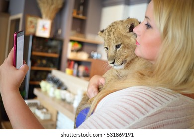 Woman holds funny calf of lion in cafe and makes selfie, focus on animal