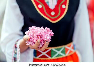 Woman holds leaves of rose damascena in her hands