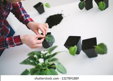 Woman home gardening relocating house plant