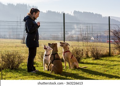 Woman instructing dogs outside