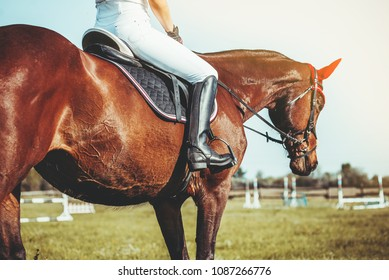 A woman jockey rides a horse in a competition in jumping.