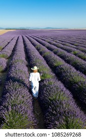 woman in the lavender fields