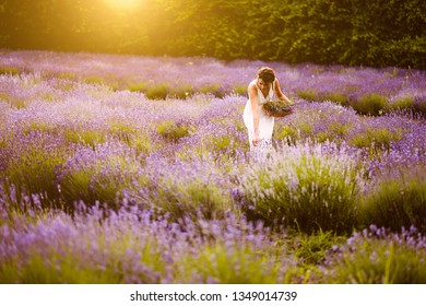Woman at lavender flower field in sunset