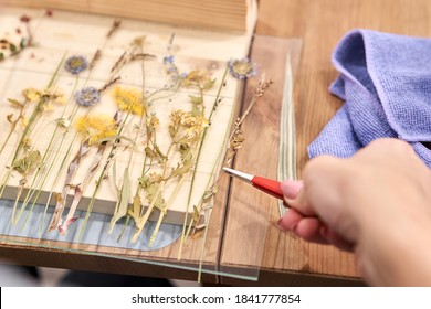 A woman lays out a composition. Master class on creating frame with Herbarium in tiffany technique in stained glass. Herbarium of dried different plants and flowers placed under a glass