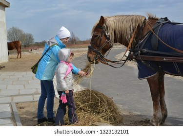 The woman with the little daughter feed a horse with hay in the open air. Kaliningrad region