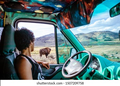 Woman looking out car window at bison in Yellowstone