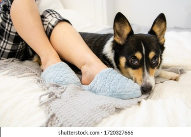 Woman lounging in bed wearing pajamas and comfortable blue slippers, spending time with loyal pet dog. Bright modern bedroom scene - Pembroke Welsh Corgi