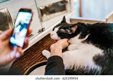 Woman making a photo of a cat with her smartphone