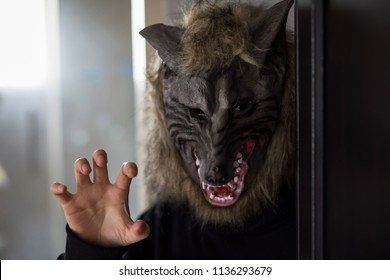 Woman or man with wolf mask and black dress costume in dark room with rim light from window. Scary model for 2018 Halloween concept with copy space for text.