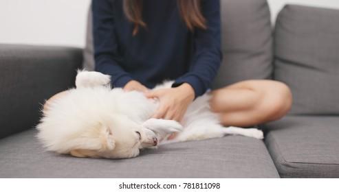 Woman massaging on her Pomeranian dog