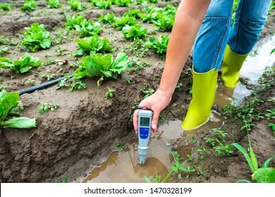 Woman mesures irrigation water with digital PH meter in watering canal. Lettuce plants.