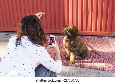 Woman with mobile smart phone taking a photo of Spanish water dog over red background. Happy dog with tongue out. Outdoors portrait