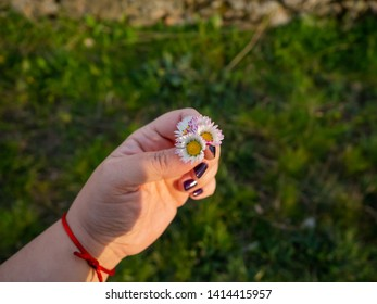 A woman with nails painted purple with daisy flowers in her hand in spring.