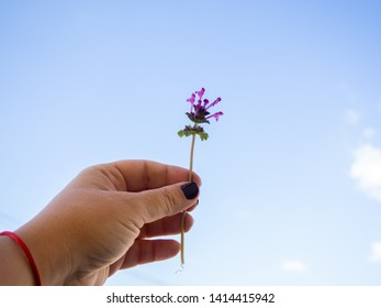 A woman with nails painted purple with flowers in her hand in spring.
