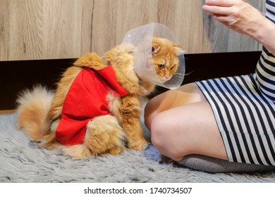Woman near cat with cone collar and Professional Recovery Suit for Abdominal  Wounds