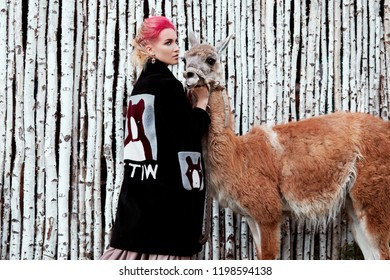 Woman near Lama in the autumn on the background of birch trees. Creative bright pink makeup on the girl face, hair coloring. Portrait of girl with a Lama. Walking in the autumn forest. Autumn clothes