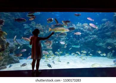 Woman in the oceanarium
