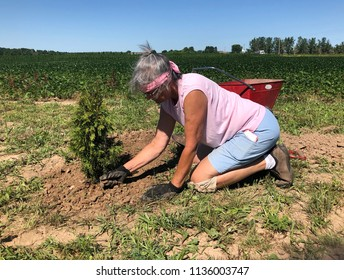Woman on her knees outdoors planting a tree in her yard