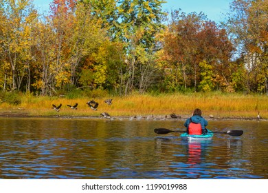 Woman on kayak taking photographs of the Canadian Geese taking off for flight making splash on the Saint John River  in Fredericton, motion blur