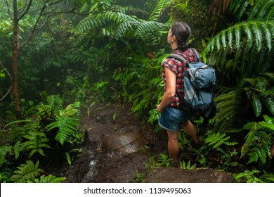 Woman passing through the rainforest, wilderness, plants, flowers. The jungle on the island of Saba in the Caribbean. Beautiful exotic plants, huge, fern. Place for walking, hiking, exploration.