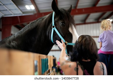 Woman petting a Clydesdale horse at a fair