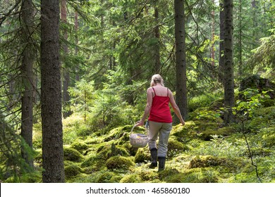 Woman picking mushrooms and blueberries in natural park woods in Finland