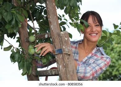 Woman picking plums