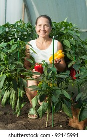 woman  picking  ripe pepper in the hothouse