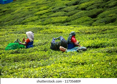 Woman picking tea leaves in a tea plantation, Munnar is best known as India's tea capital