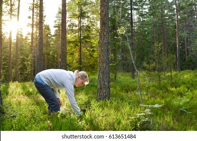 Woman picking wild berries and mushrooms in national park forest in Finland