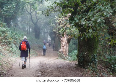 a woman pilgrim with a red backpack walking into an oak forest along the pilgrimage route of the camino de santiago, northern spain