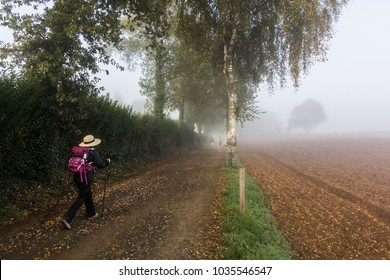 a woman pilgrim is walking  near a crop field along  the Camino de Santiago or St James pilgrimage way in Spain in a misty day and wearing a hat a big backpack from where the scallop shell is hanging