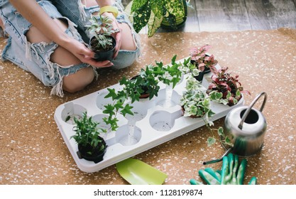 Woman planting flowers,succulents in the home. Work at home. Plants and gardening tools on wooden background