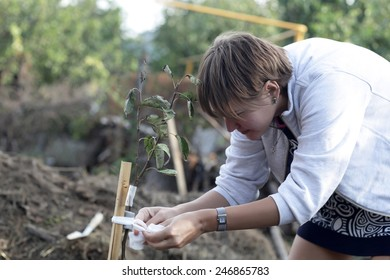 Woman planting seedling of fruit tree in garden