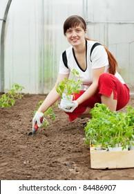 woman planting tomato spouts in greenhouse