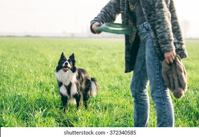 Woman playing with her border collie dog, throwing the frisbee