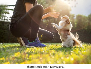 woman playing  with his dog friend outdoor with sunlight. Friendship and love concept. - Image
