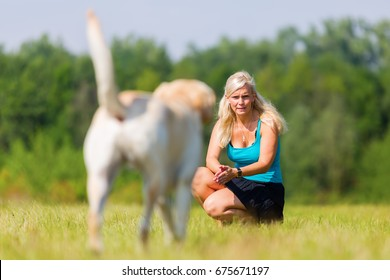 woman plays with a labrador dog on the meadow