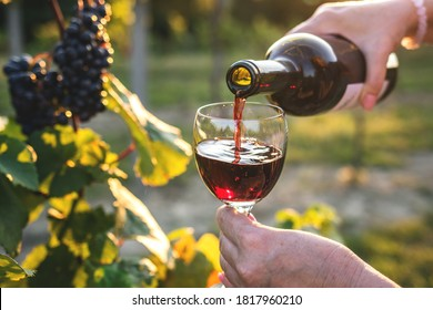 Woman pouring red wine from bottle into drinking glass at vineyard. Female sommelier tasting wine outdoors