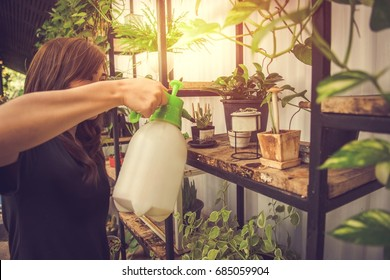 Woman pours from a watering organic vegetable and plant in the pots on the many black rack under the roof., beautiful girl holding a watering can with water.