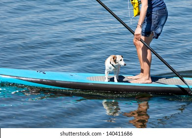 Woman practicing paddle surf with her dog on the surfboard.