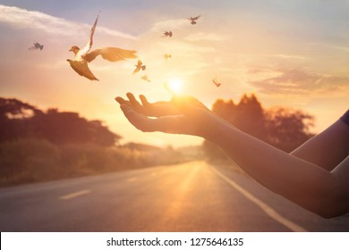 Woman praying and free bird enjoying nature on sunset background, hope concept, soft focus