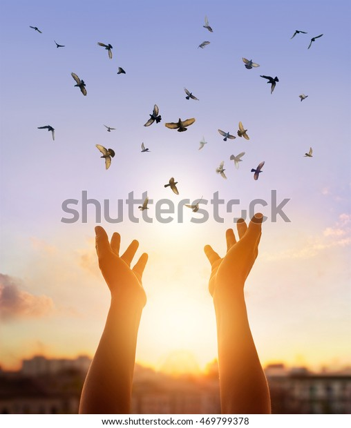Woman Praying Free Bird Enjoying Nature Stock Photo (Edit