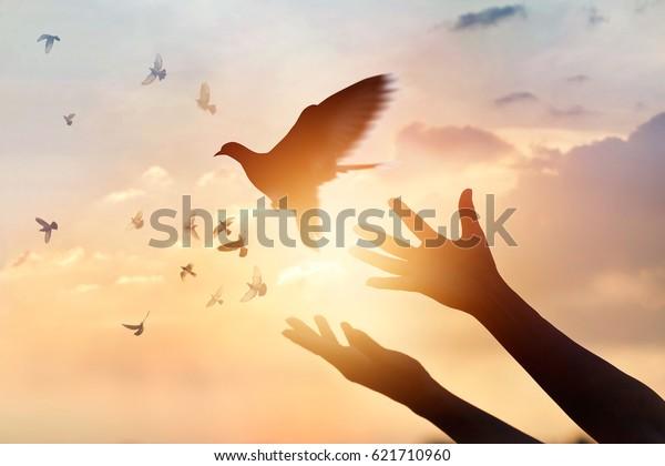 Woman praying and free bird enjoying nature on sunset background, hope concept