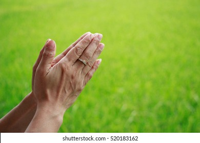 Woman put the palm of the hands at green rice fields Background