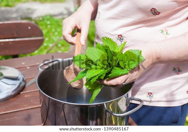 woman-putting-leaves-lemon-balm-600w-139