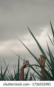 woman raising hands to heaven in a field