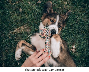 Woman with red nails, playing with her dog. Playful young dog at