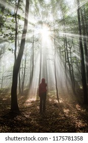 Woman in red standing in a misty forest between thin pine trees with gorgeous rays of sunlight breaking the mist and hitting the earthy colored fallen leaves on the ground