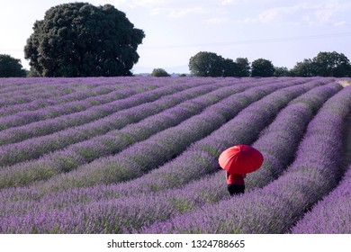 Woman with red umbrella walking among the purple flowers